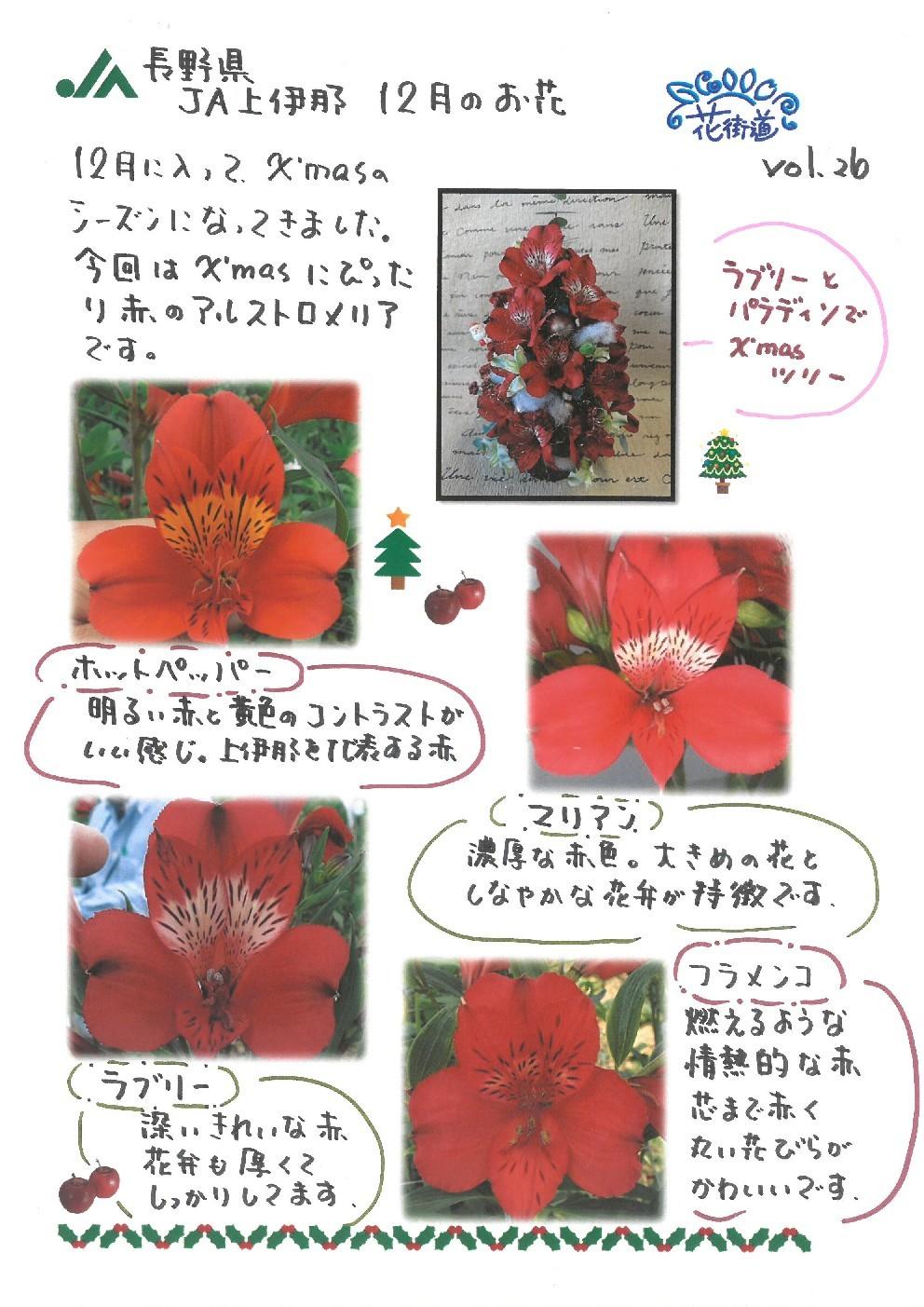 ✨🎄✨真っ赤なお花の~🎵✨🎄✨_d0062298_07305830.jpg