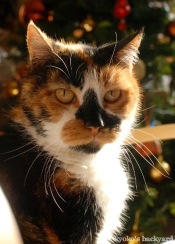 猫って柔軟_b0253205_05040695.jpg