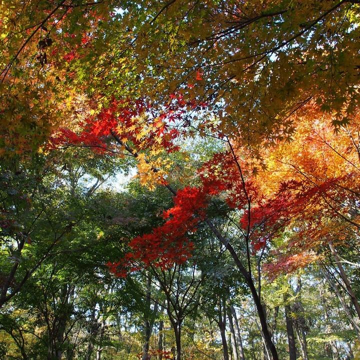 紅葉の平林寺(その1)_a0268412_22251985.jpg