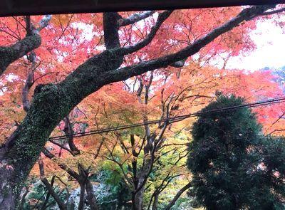 紅葉を見ながらコーヒータイム_e0234016_16222525.jpg