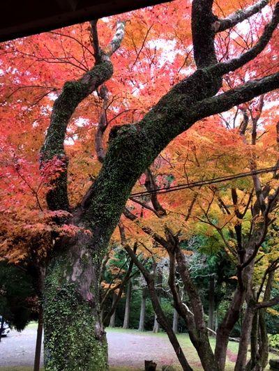 紅葉を見ながらコーヒータイム_e0234016_16224493.jpg