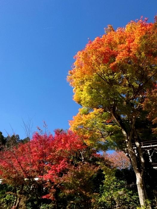 幸せ京都旅 「善峯寺」 山寺を彩る美しき紅葉_c0362623_15242259.jpg