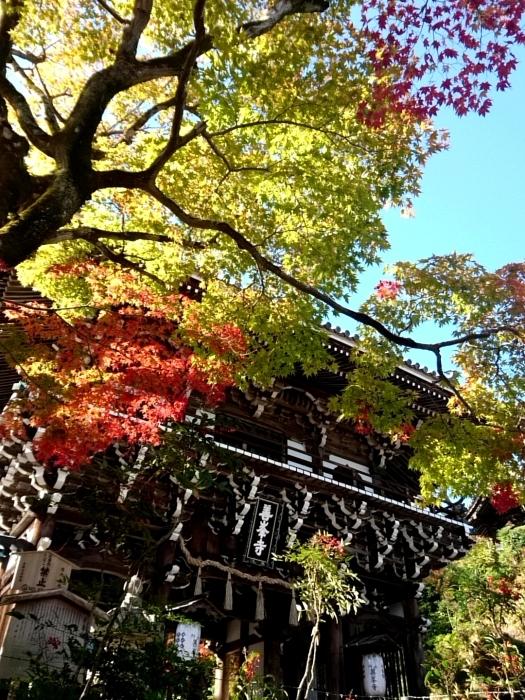 幸せ京都旅 「善峯寺」 山寺を彩る美しき紅葉_c0362623_15242294.jpg