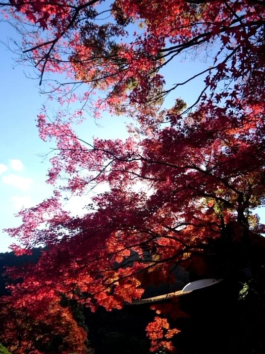 幸せ京都旅 「善峯寺」 山寺を彩る美しき紅葉_c0362623_15242355.jpg