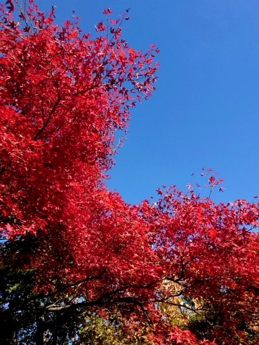 幸せ京都旅 「善峯寺」 山寺を彩る美しき紅葉_c0362623_15242488.jpg