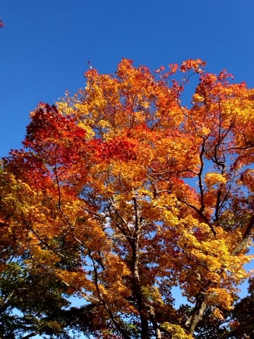幸せ京都旅 「善峯寺」 山寺を彩る美しき紅葉_c0362623_15242555.jpg