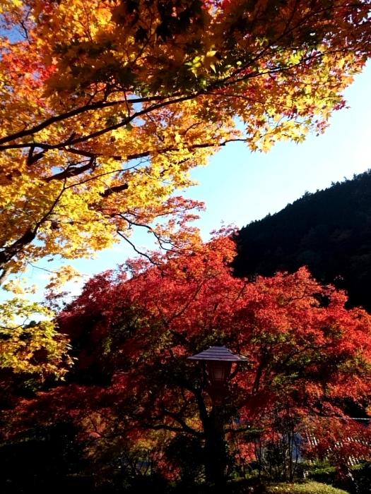 幸せ京都旅 「善峯寺」 山寺を彩る美しき紅葉_c0362623_15242651.jpg