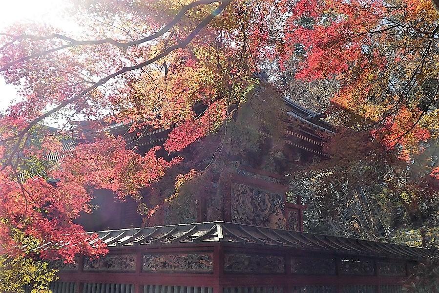 11/27 高尾山紅葉_d0288144_21373178.jpg