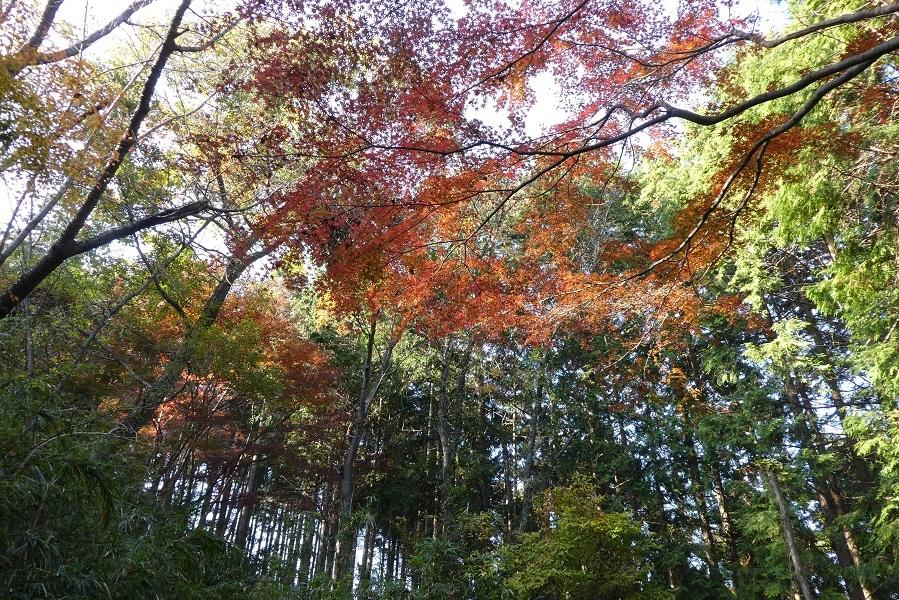 11/27 高尾山紅葉_d0288144_21391567.jpg