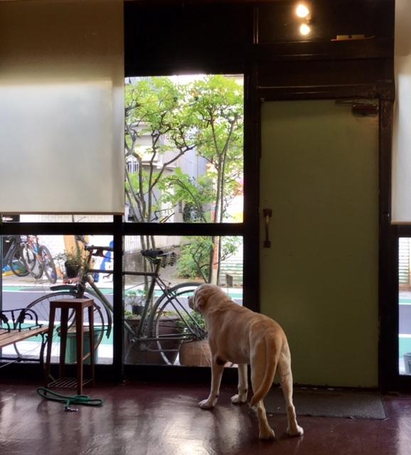 with dog  美容室で塗装談議(笑)_a0165160_15372531.jpg