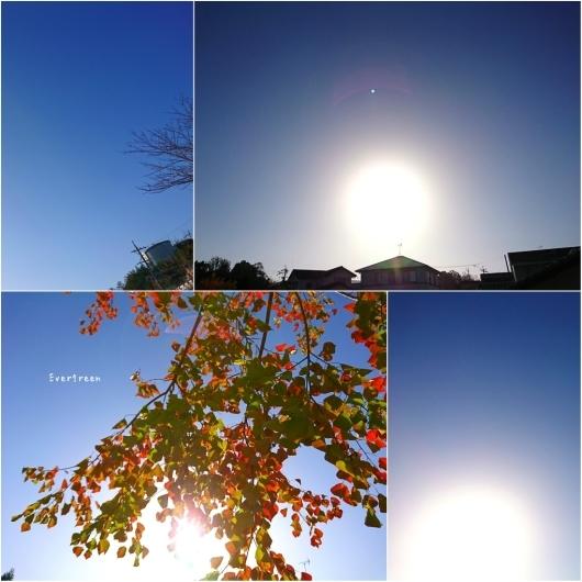 11/29(木)②        冬支度の植物たちと写真教室。_d0362666_19564706.jpg