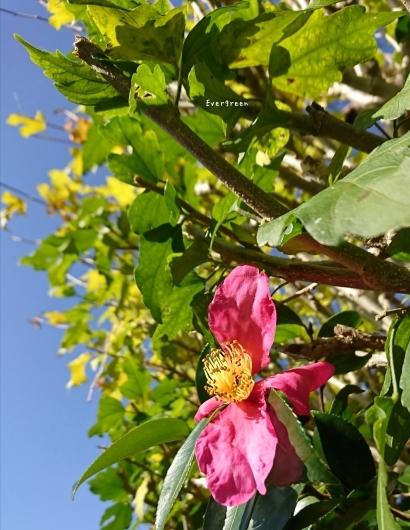 11/29(木)②        冬支度の植物たちと写真教室。_d0362666_19570510.jpg