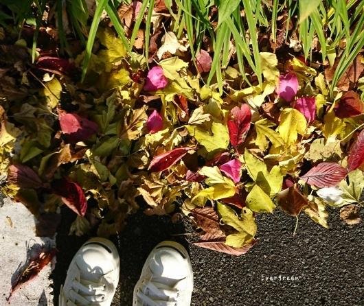 11/29(木)②        冬支度の植物たちと写真教室。_d0362666_19572058.jpg