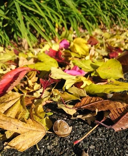 11/29(木)②        冬支度の植物たちと写真教室。_d0362666_19573389.jpg