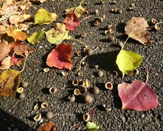 11/29(木)②        冬支度の植物たちと写真教室。_d0362666_19575435.jpg