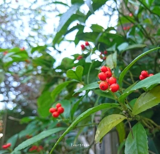 11/29(木)②        冬支度の植物たちと写真教室。_d0362666_19582828.jpg