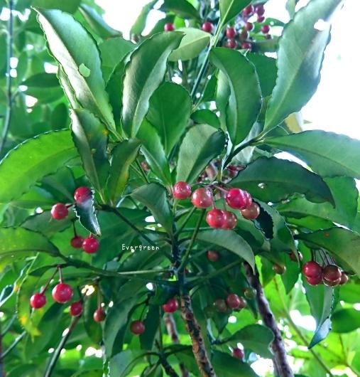 11/29(木)②        冬支度の植物たちと写真教室。_d0362666_19584301.jpg