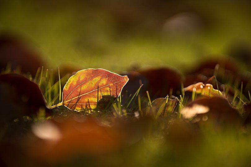 冬陽を透過する葉たち_d0353489_20282370.jpg