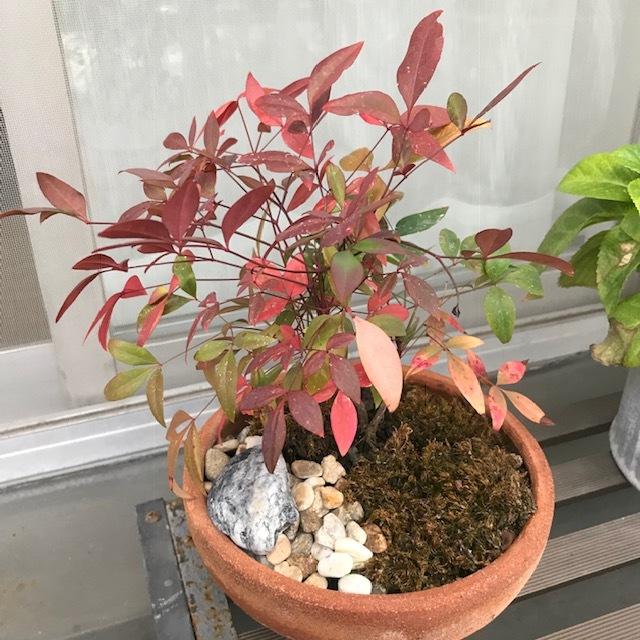 小さな盆栽_f0204295_16081804.jpg