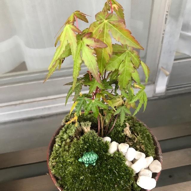 小さな盆栽_f0204295_16123116.jpg
