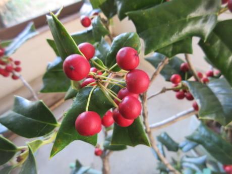 クリスマスホーリーの木、ミニの靴下・手袋_a0203003_22084544.jpg