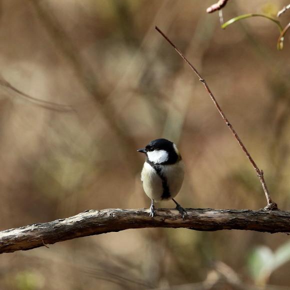 お山の水場に集う鳥たち    KGK_d0346713_19545571.jpg