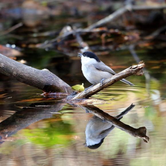 お山の水場に集う鳥たち    KGK_d0346713_20003777.jpg