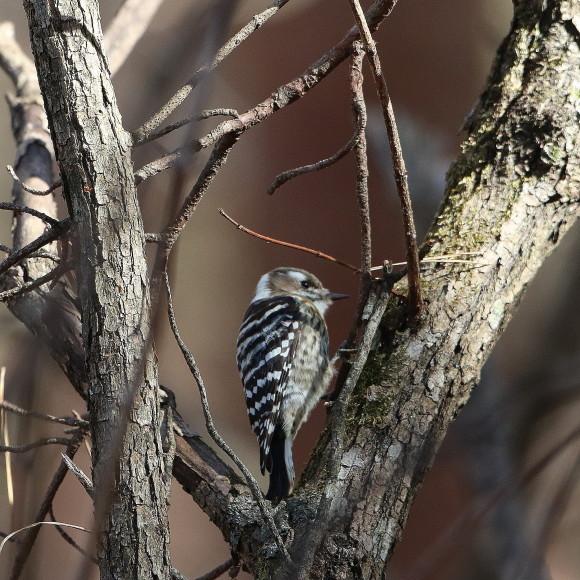 お山の水場に集う鳥たち    KGK_d0346713_20054104.jpg