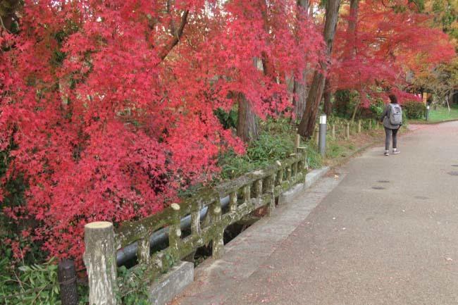 紅葉終盤 植物園_e0048413_21361329.jpg