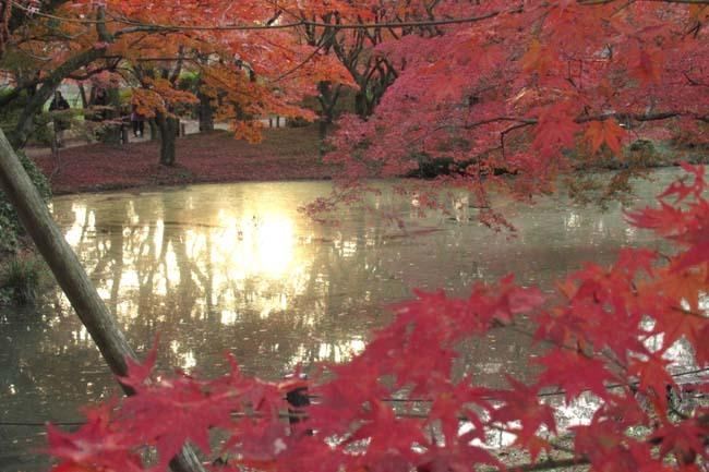 紅葉終盤 植物園_e0048413_21362063.jpg