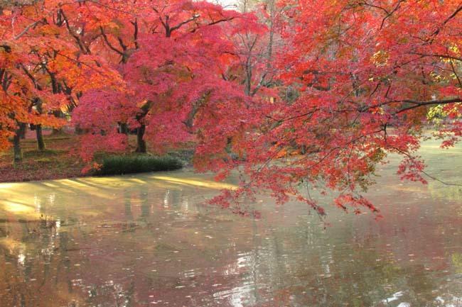 紅葉終盤 植物園_e0048413_21362628.jpg