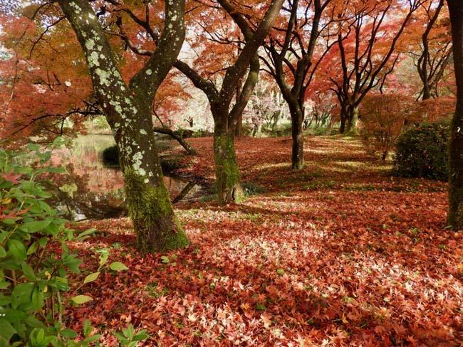 紅葉終盤 植物園_e0048413_21363380.jpg