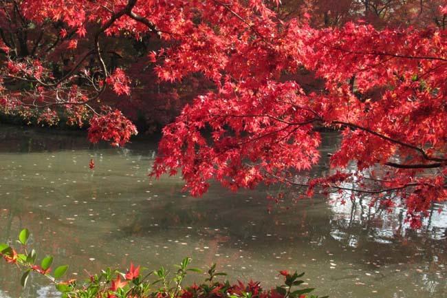 紅葉終盤 植物園_e0048413_21363967.jpg