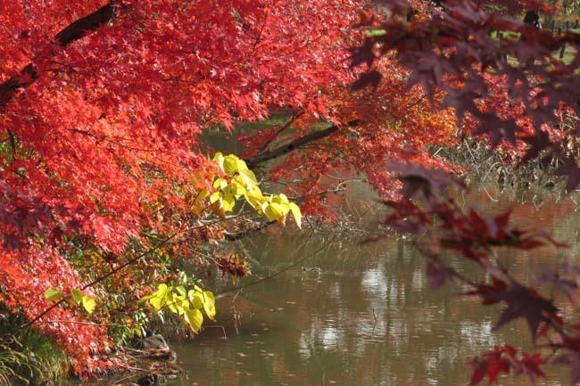 紅葉終盤 植物園_e0048413_21364405.jpg