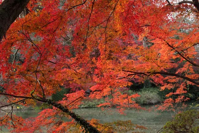 紅葉終盤 植物園_e0048413_21365833.jpg