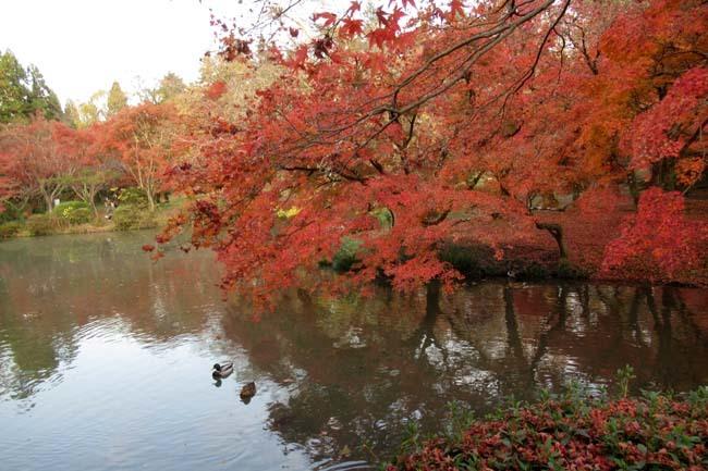 紅葉終盤 植物園_e0048413_21370226.jpg