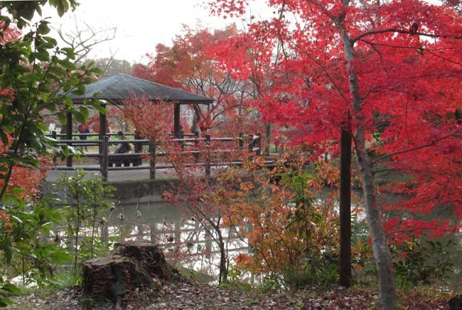 紅葉終盤 植物園_e0048413_21370872.jpg
