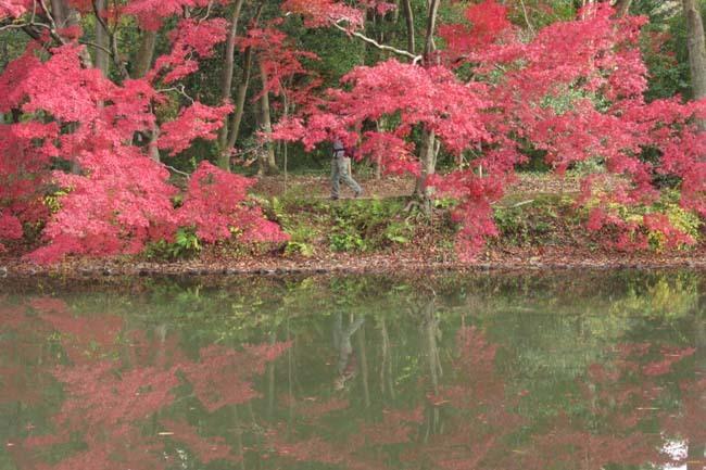 紅葉終盤 植物園_e0048413_21371305.jpg