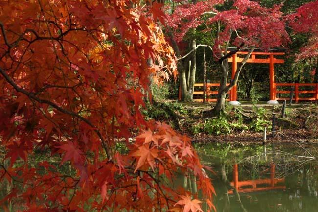 紅葉終盤 植物園_e0048413_21371613.jpg