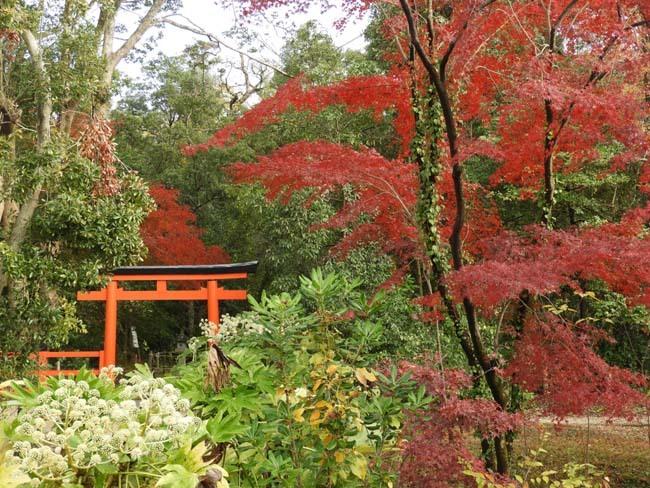 紅葉終盤 植物園_e0048413_21372094.jpg