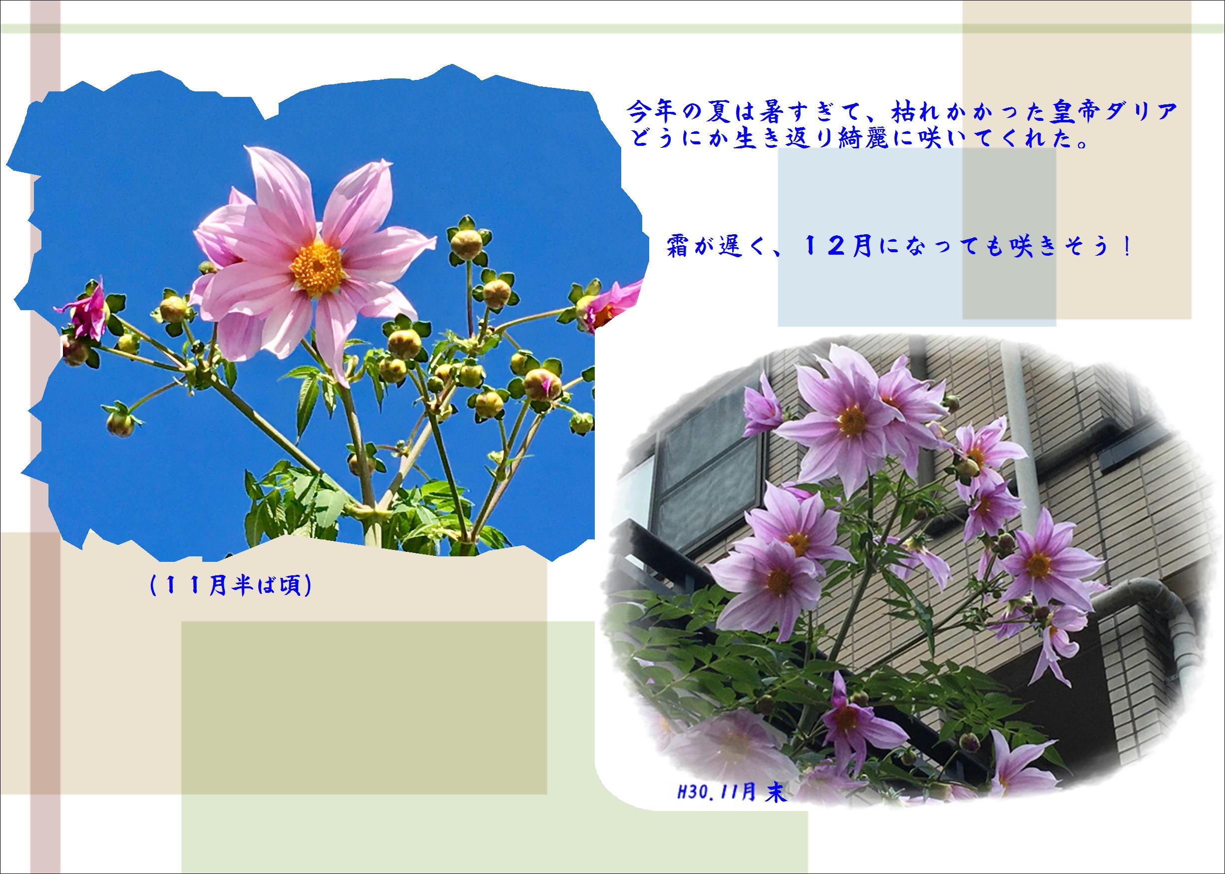 b0043355_16355380.jpg