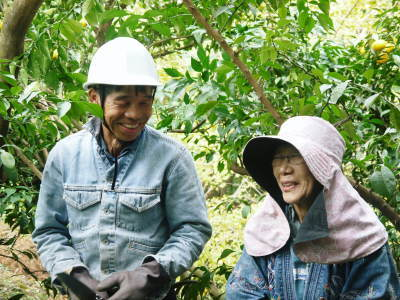 令和元年度の『香り高き柚子』の「冬至用柚子」はいよいよ残りわずか!!ご注文はお急ぎください!_a0254656_19445233.jpg