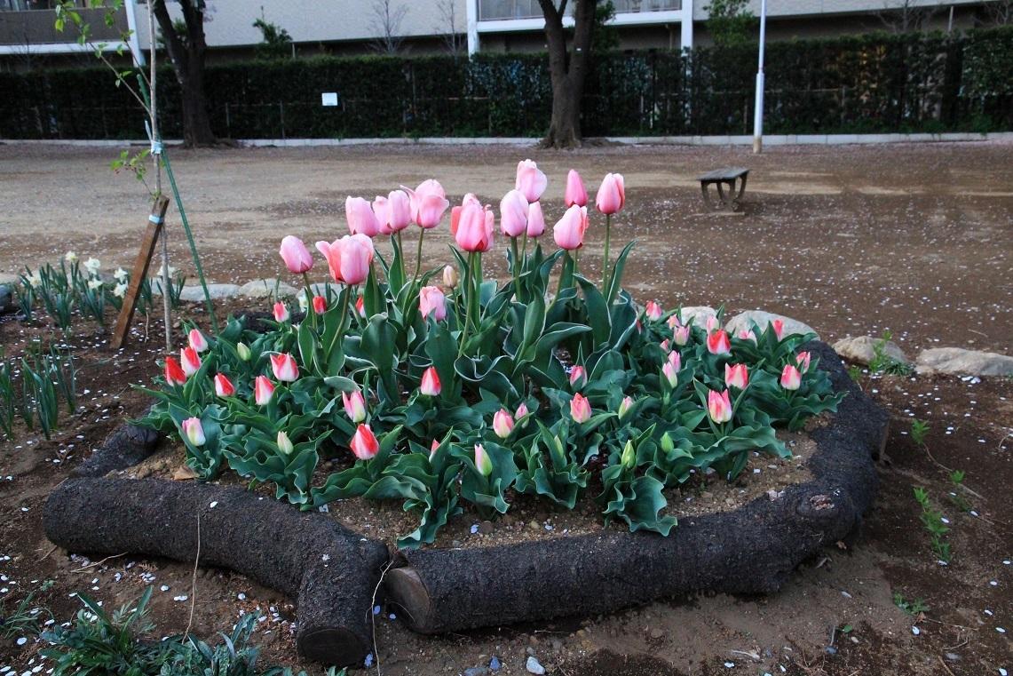 福岡中央公園に集まって ~ユリ、チューリップ、ビオラ~_a0107574_19273021.jpg