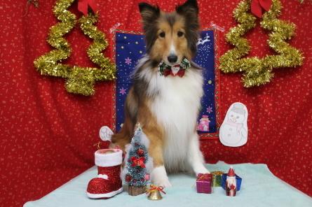12月!クリスマスケーキ作り☆_f0170713_18173416.jpg