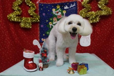 12月!クリスマスケーキ作り☆_f0170713_18190193.jpg