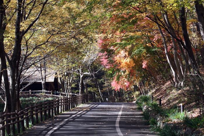 秋色とキセキレイ_f0239515_634572.jpg