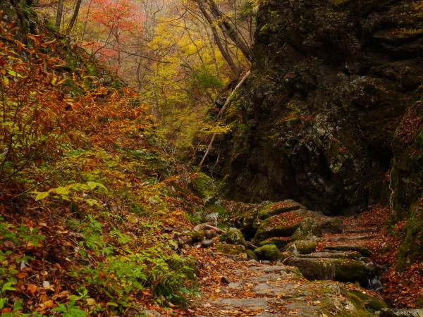 御岳山ロックガーデン_a0351368_11524669.jpg