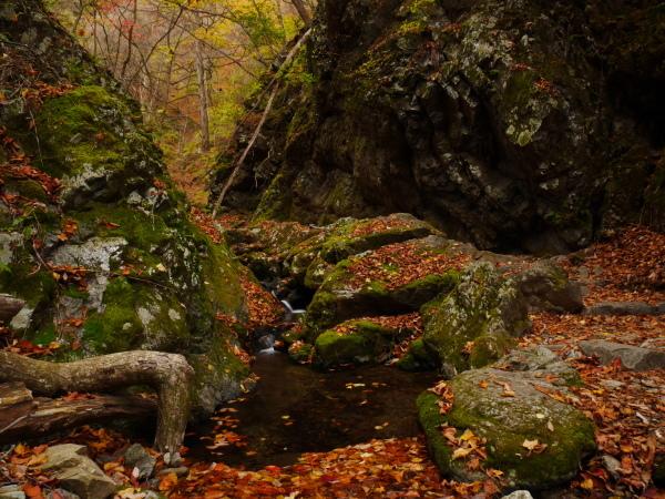 御岳山ロックガーデン_a0351368_11530049.jpg