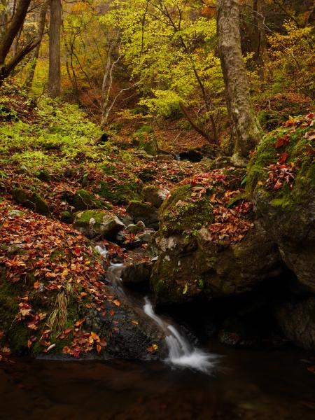 御岳山ロックガーデン_a0351368_11544174.jpg