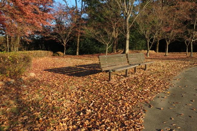 落ち葉のベンチ _a0357206_20594007.jpg